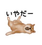 元気いっぱいの柴犬(個別スタンプ:22)