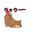 元気いっぱいの柴犬(個別スタンプ:23)