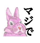 ぴょいーんちゃんスタンプ(個別スタンプ:23)