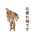 エイの干物(実写版)(個別スタンプ:20)