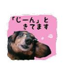 【X'mas & お正月】おとぼけダックス(個別スタンプ:06)