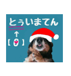 【X'mas & お正月】おとぼけダックス(個別スタンプ:08)