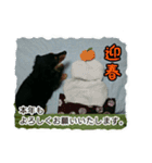 【X'mas & お正月】おとぼけダックス(個別スタンプ:13)