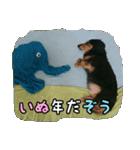 【X'mas & お正月】おとぼけダックス(個別スタンプ:14)