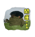 【X'mas & お正月】おとぼけダックス(個別スタンプ:15)