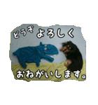 【X'mas & お正月】おとぼけダックス(個別スタンプ:16)