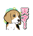 わんこ日和 ビーグル こいぬ vol.3(個別スタンプ:09)