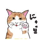 猫だけ(個別スタンプ:05)
