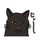 猫だけ(個別スタンプ:15)