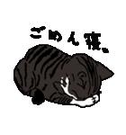 猫だけ(個別スタンプ:16)