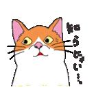 猫だけ(個別スタンプ:27)