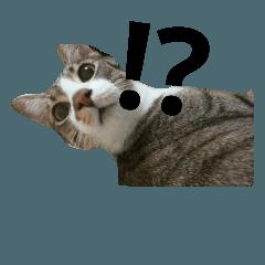 おデブな猫ちゃんスタンプです