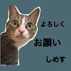 こなちゃん 2
