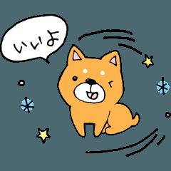 子犬の柴犬