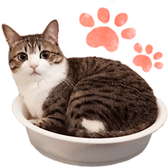 猫の『すずめちゃん』にゃり!