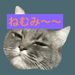 猫のごましおの鬼カワスタンプ