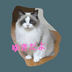 猫の ゆきちゃん