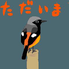 [LINEスタンプ] 動く日本の野鳥 秋冬 (1)