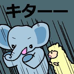 象のジェイスン
