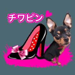 [LINEスタンプ] ピンクハイヒールとチワピン犬 ロワ君