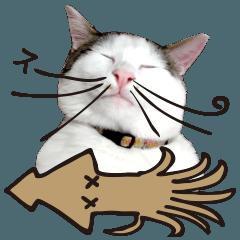 猫のヌーン!