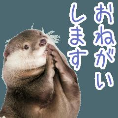 コツメカワウソ竹千代