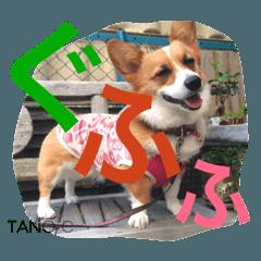 [LINEスタンプ] コーギー☆マンデー2 (1)