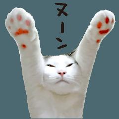 猫のヌーン!第二弾