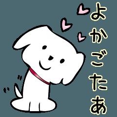 飯塚弁のマルチーズ(博多弁とちょっと違う