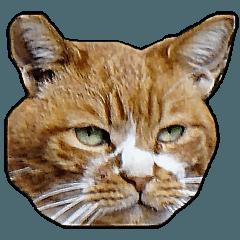 16種の猫の表情