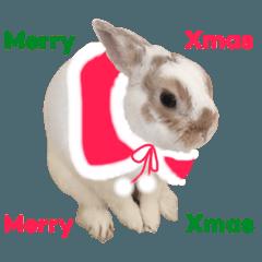 コニトさん 6 【コニトのクリスマス】