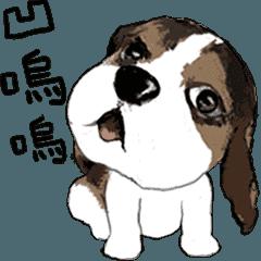わんちゃんとウサギちゃん-A(animated)