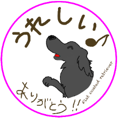 Flat coated retriever Ⅳ
