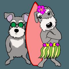 ラッキードッグ_2:シュナウザー in ハワイ