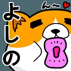 [LINEスタンプ] よしのより愛を込めて(名前スタンプ・猫)