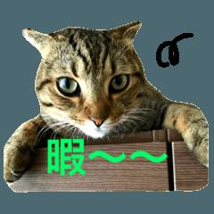 2匹の猫ちゃんの使いやすいスタンプ