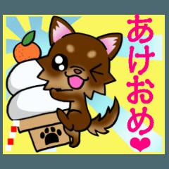 チョコレートタン・ちわわのお正月!