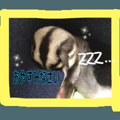 FUKUMOMO1024