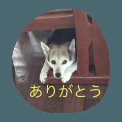 〜ココちゃんスタンプ〜