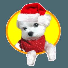 夜明けのマルチーズ (クリスマス&正月編)