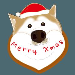 かわいい柴犬のクリスマス