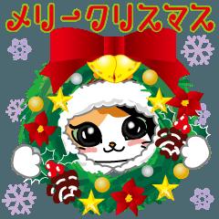 三毛猫ちゃん! クリスマスバージョン♪