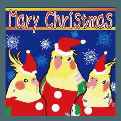 わくわくオカメインコのクリスマス