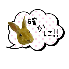 [LINEスタンプ] *うさぎのうさちゃん*いろいろ… (1)