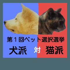 犬と猫の人気選挙
