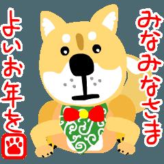 トイプーと柴犬のお正月とクリスマス
