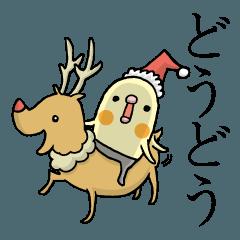 クリスマスのミタメオカメ。