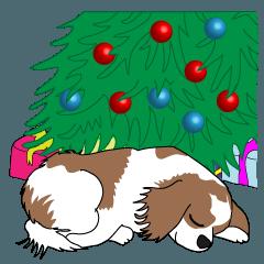 犬と クリスマス:キャバリア