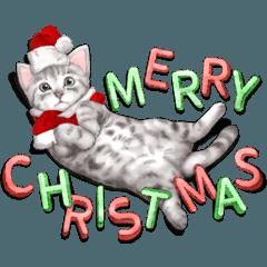 アメショのクリスマス&お正月