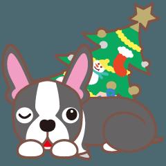 クリスマスと年末〜ボストンテリアと車